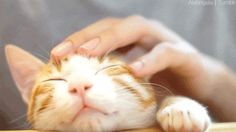Here's How To Understand What Your cat Is Saying