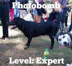photobomb.png (545×502)