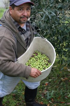 Harvesting early, when our olives are still green, gives our oil its signature grassy notes, with hints of artichoke and leek.