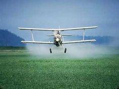 Are Pesticides Really Hazardous?