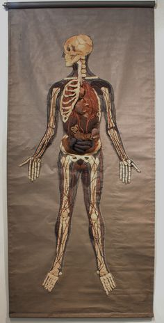 Specimen # 8.Medical Chart .soft anatomy sculpture by Andrew Delaney .Anno Domini Home . The Vivisector .