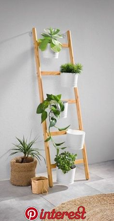 Lidl Grocery Store Cheap Gardening Prices 2018 Ladder and pots for ladder for house plants, Lidi gro Balcony Plants, House Plants Decor, Plant Decor, Balcony Garden, Plant Ladder, Ladder Decor, Living Room Decor Green Walls, Indoor Garden, Indoor Plants
