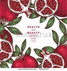 49 ideas for fruit logo design illustration Fruit Illustration, Illustration Vector, Food Illustrations, Botanical Illustration, Grenade Fruit, Pomegranate Art, Pomegranate Vector, Fig Fruit, Vintage Logo