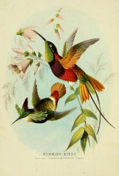 Hummingbirds, c1874