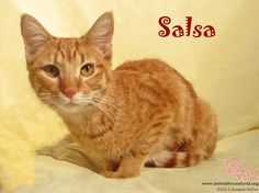 Salsa has been adopted! Salsa - and her siblings Cheeto, Frito, Dorito, and Chex were rescued from the street as newborns several months ago with their mama Finney. Cheeto was adopted a little bit ago, and earlier this week the same family came and adopted sibling Salsa! Salsa and Cheeto are now happily together with their new forever family! Yippeeeeeeeeee for the snack kids!