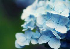 Blue by melissa_dawn, via Flickr