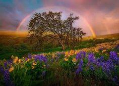Resultado de imagen de rainbow landscape