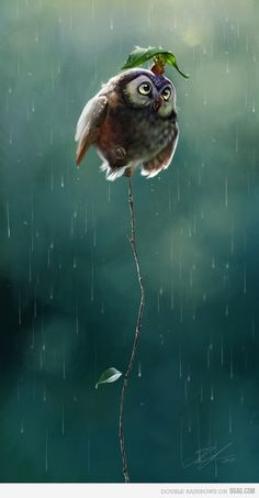owl (shelter from the storm)
