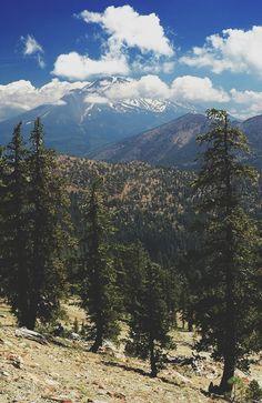 woodland, woods, tundra,