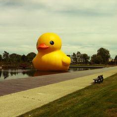 De Badeend - Hofman Seen in Neerpelt, Belgium, 2012  Huge floating rubber ducky!