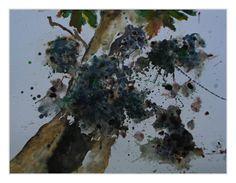Holunder, Aquarell 40x60 cm