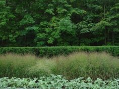 Yew hedges are finding their well-deserved place in contemporary gardens as well. Here, Hicks yew forms a backdrop to show off the seasonal color of switchgrass (Panicum virgatum, zones 4 to 9). This contrast in styles adds another layer of interest. Traditional Landscape by Deborah Silver and Co Inc