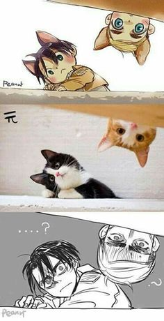 levi, attack on titan, and anime image Levi And Erwin, Levi X Eren, Levi Ackerman, Armin, Neko, Aot Funny, Funny Memes, Fanarts Anime, Manga Anime