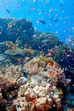 Explore Bali's underwater scenery on a snorkeling expedition at Menjangan Island. #Jetsetter