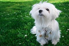 give a dog your heart, and she'll give you hers | Flickr - Photo Sharing!