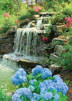 Beaux hortensias bleus sur cascade