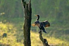 Bird, Animals, Animales, Animaux, Birds, Animal, Animais