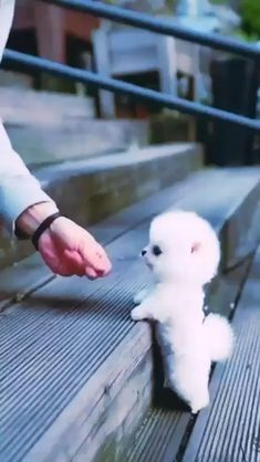 Cute White Puppies, Cute Baby Puppies, Really Cute Puppies, Cute Little Kittens, Cute Cats And Dogs, Baby Animals Super Cute, Cute Little Animals, Cute Funny Dogs, Cute Funny Animals