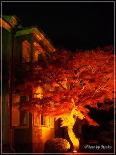 博物館明治村・ライトアップ