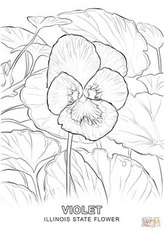 Garden Pansy Coloring Page From Category Select 27278 Printable Crafts Of Cartoons Nature Animals Bible And Many More