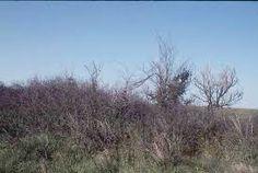 Image result for tall-grass grasslands