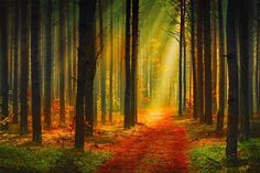 Sunrise in autumn forest hd wallpaper Autumn Nature, Autumn Forest, Autumn Art, Autumn Trees, Forest Path, Oil Paint Effect, Forest Wallpaper, High Resolution Wallpapers, Light Trails