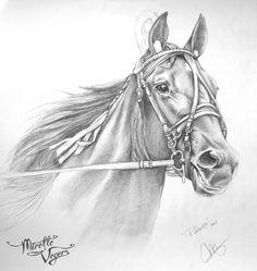 Horse Drawings, Art Drawings Sketches, Animal Drawings, Black Pen Sketches, Standardbred Horse, Bird Sketch, Graphite, American Saddlebred, Art Drawings Beautiful