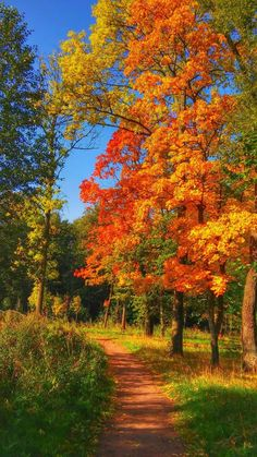 (notitle) - Colors of autumn❤❣ - Travel Fall Pictures, Fall Photos, Nature Pictures, All Nature, Amazing Nature, Flowers Nature, Beautiful World, Beautiful Places, Beautiful Pictures