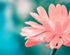 nature photography fine art botanical by mylittlepixels