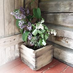 Lilacs and whitewash