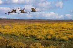 Paynes Prairie Reserve | 540x360.jpg