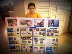One of our biggest fans was so inspired by Flight of the Butterflies, he did his science fair project on butterflies!