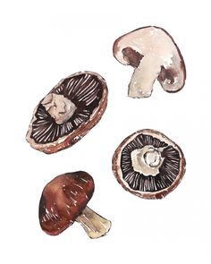 FUNGHI watercolor illustration Art Print for the kitchen by Good Objects