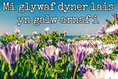 15 of the most beautiful lines ever written in the Welsh language - Wales Online