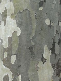 Gumtree bark pattern. Free image. Room Posters, Poster Wall, Patterns In Nature, Textures Patterns, Australian Flowers, Background Colour, Design Movements, Painted Walls, Othello