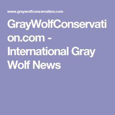 GrayWolfConservation.com - International Gray Wolf News