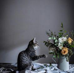 Kedilerden Öğrenmemiz Gereken Hayat Dersleri    * Bilmediğimiz şeylere karşı temkinli yaklaşmalıyız, herşey her zaman umduğumuz gibi çıkmayabilir.  * Hayatta herşeyi elde etmek istiyorsan, başkalarından beklemek yerine kendi işini kendin yapmalısın.  * Hayatta insanın en büyük düşmanı aslında kendisidir.  * Hayat bize beklenmedik sürprizler yapabilir. Herşeye karşı hazırlıklı olmalıyız.   * Istediğimiz birşey ayağımıza kadar gelmişse peşini bırakmamalıyız.  * Farklılıklara hoşgörü…