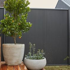 A throwback to citrus tree looks perfect against the COLORBOND® steel Monument fence.