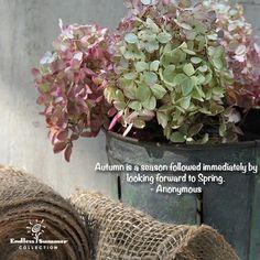Endless Summer Hydrangea fall arrangement