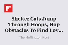 Shelter Cats Jump Th