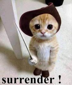 surrender- funny cat pictures