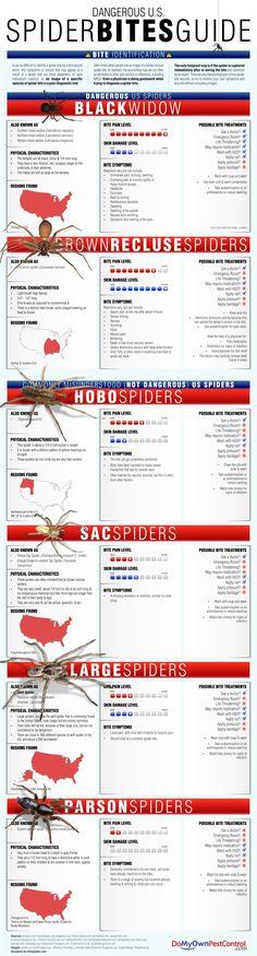 dangerous-us-spider-bites-guide