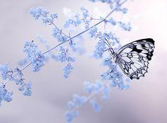 I heart butterflies!!