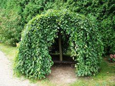 How To Start Organic Gardening Vegetables Product Weeping Trees, Garden Parasols, Sensory Garden, Garden Design Plans, Most Beautiful Gardens, Deciduous Trees, Backyard, Patio, Hedges