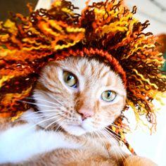 Lion Costume Cat