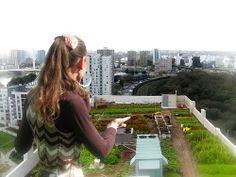 roof-farming