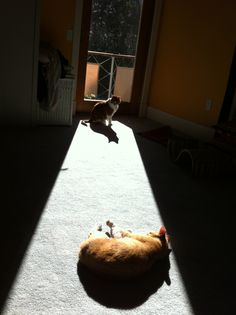 Cats sleeping in the sunspot on the carpet.