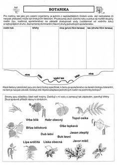 Výsledek obrázku pro přírodověda 4. třída pracovní listy Sheet Music, Notes, Biology, Report Cards, Music Score, Notebook, Music Notes