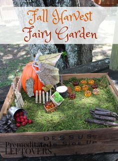 DIY Fall Harvest Fairy Garden Tutorial - Celebrate autumn with this harvest themed fairy garden idea. It's such a cute way to decorate your home or outdoors this season.