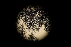 """A full moon is seen behind tree branches in the Macedonian city of Skopje on Aug. According to NASA, this is the second time in August that a full moon has been seen. The first was on the night of Aug. This phenomenon is referred to as a """"blue moon. Night Sky Photos, Moon Photos, Shoot The Moon, Kind Of Blue, Beautiful Moon, Great Photographers, Star Sky, Blue Moon, Sun Moon"""